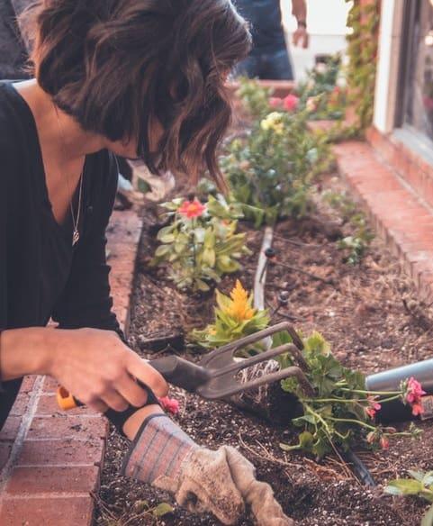 7 Homemade Organic Pesticides For Your Garden