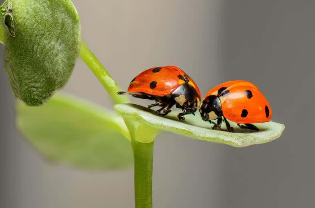 7 Natural Ways To Control Garden Pests