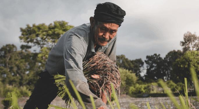 Practice Organic Farming