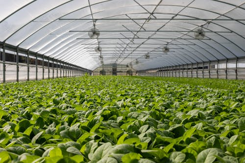 Organic Agriculture Versus Sustainable Agriculture