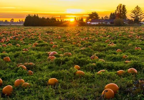Top 6 Environmental Benefits Of Organic Farming