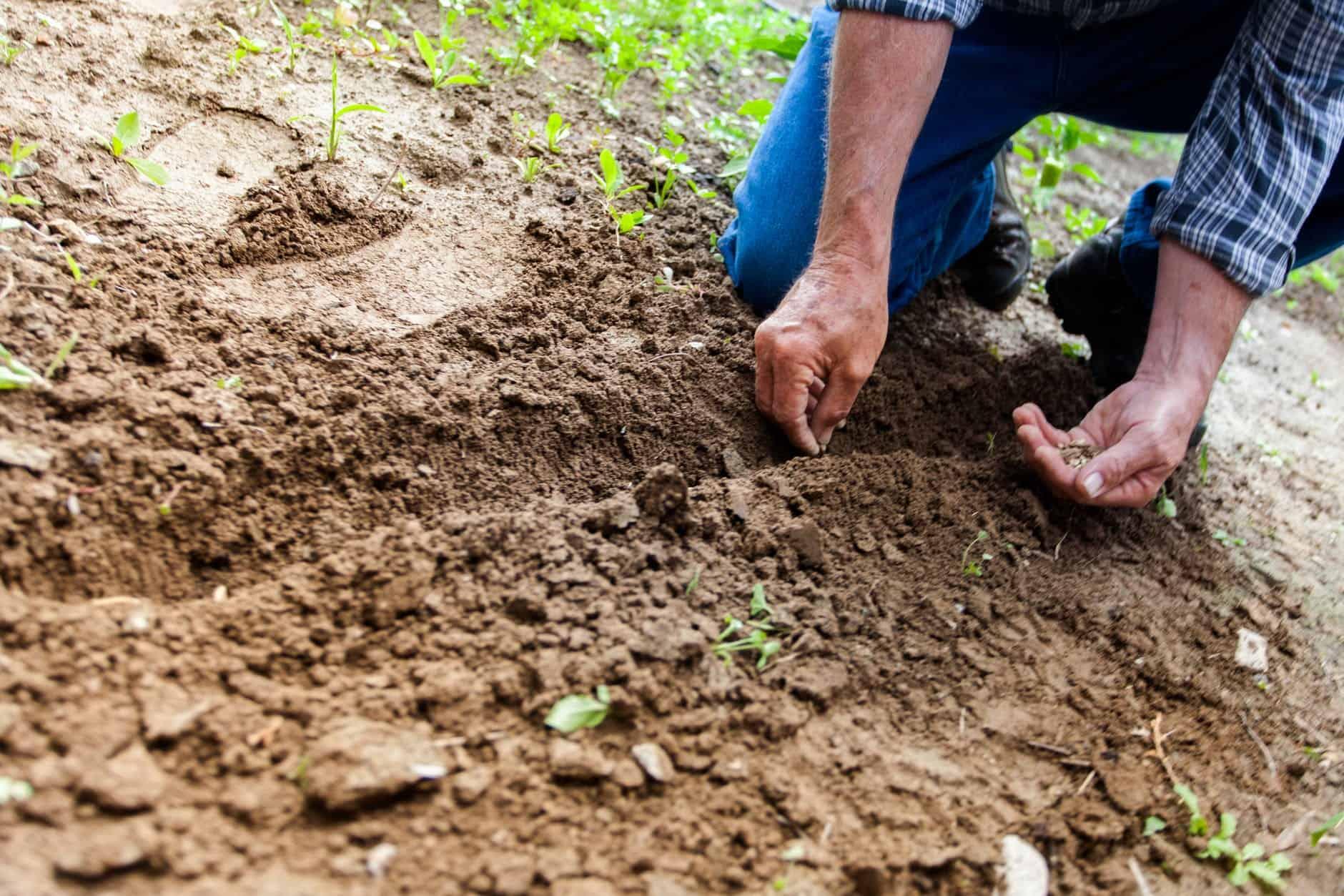 Cons Of Organic Farming