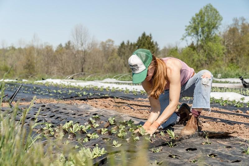 organic farming facts